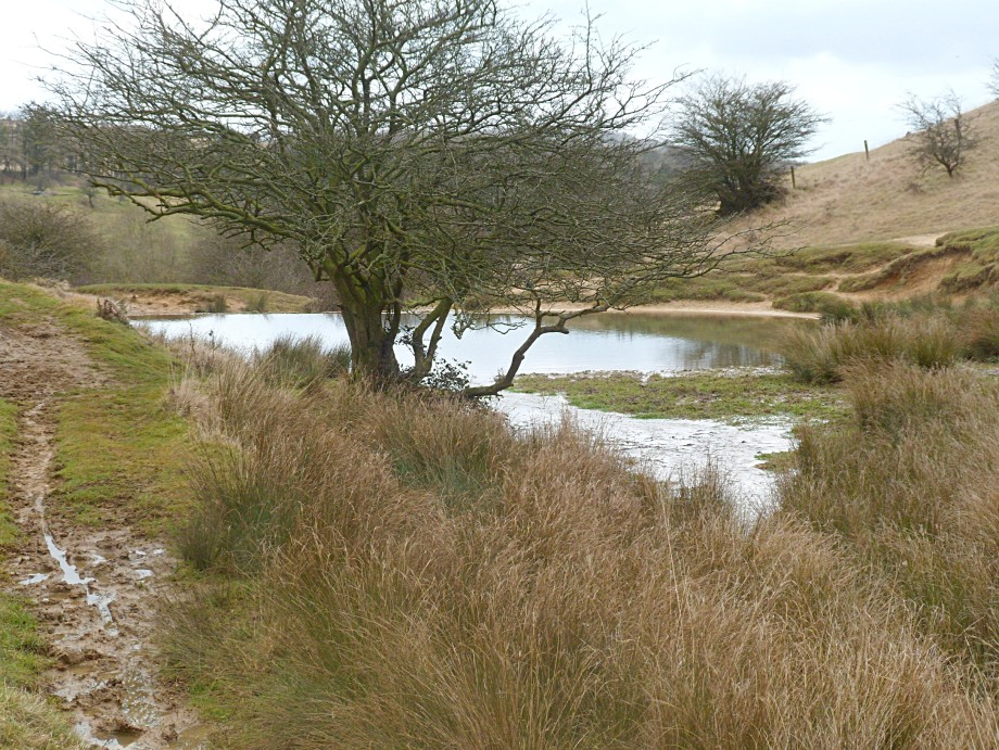 The Wash Pool, Cleeve Hill