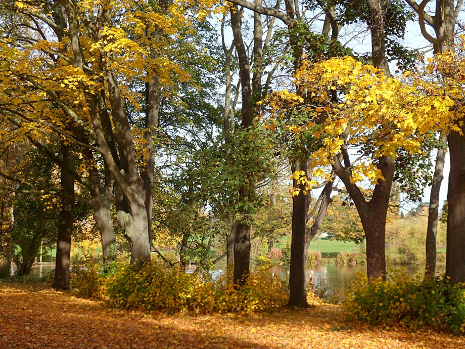 Pittville Park, autumn